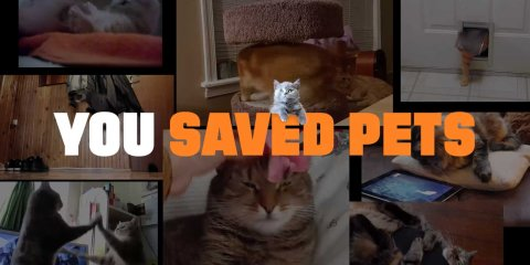 you-saved-pets-10-HR