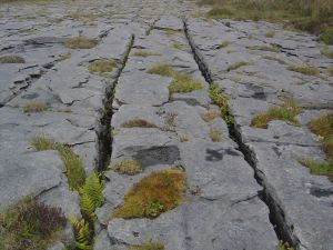 The typical limestone landscape of the Burren