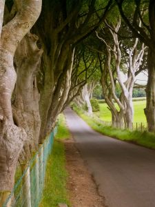 Dark HEdges 1
