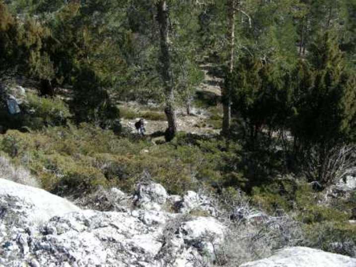Bosques del Mogorrita