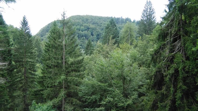 bosques de Eslovenia