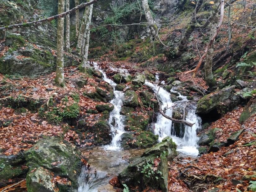 Mini cascadas en el rio