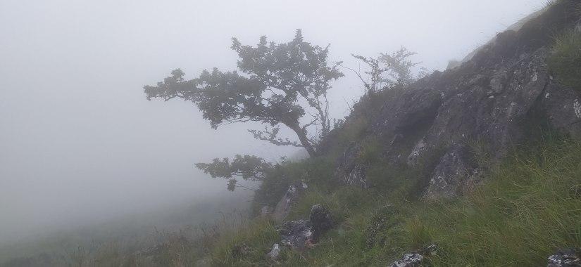 Niebla vasca