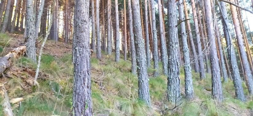 Bosques de gredos