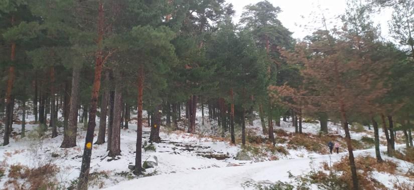 Bosques de Cercedilla