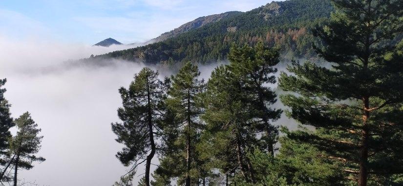 Nubes en los bosques