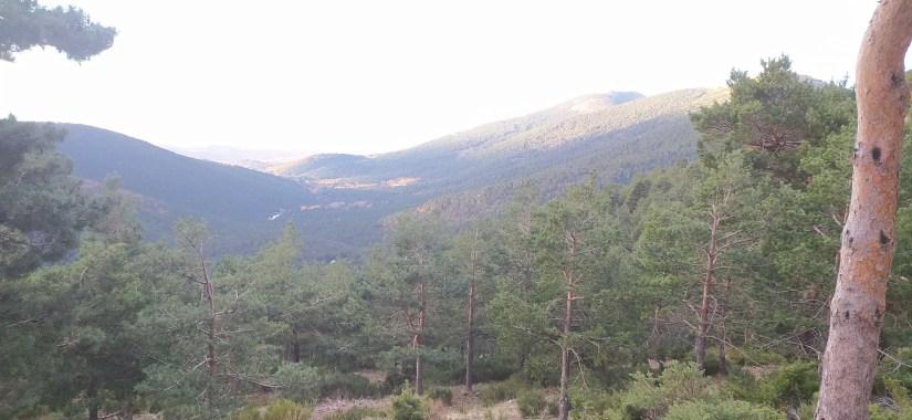 Ruta por bosques