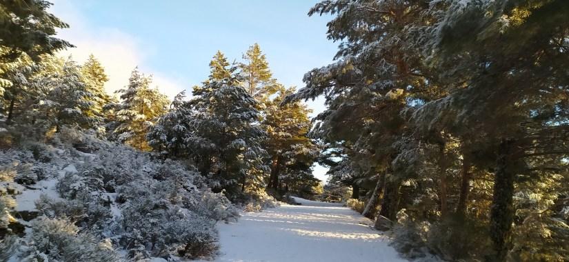 Bosque de Peñalara