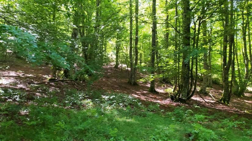 Bosque de Navarra