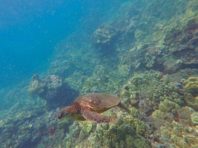 ocean conservation
