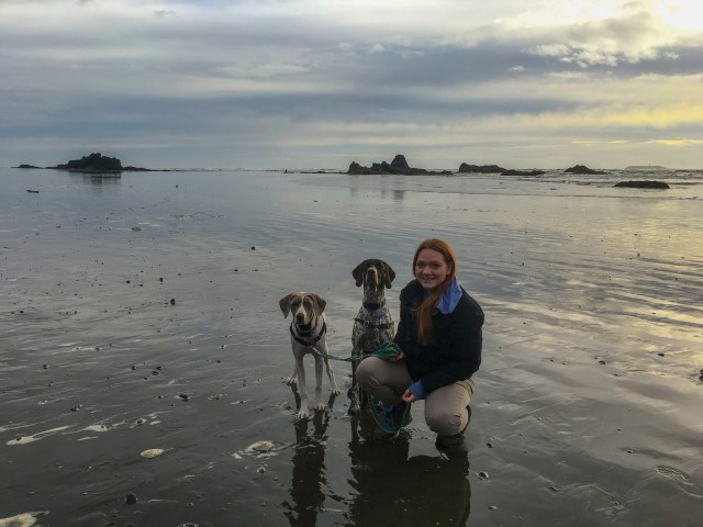 Woman and Big Brown and White Germanshorthaired Pointer and Grey and White Pointer Mix standing on the reflective beach at sunset