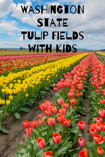 "Rows of pink, yellow and orange tulips with text ""Washington State Tulip Fields With Kids"""