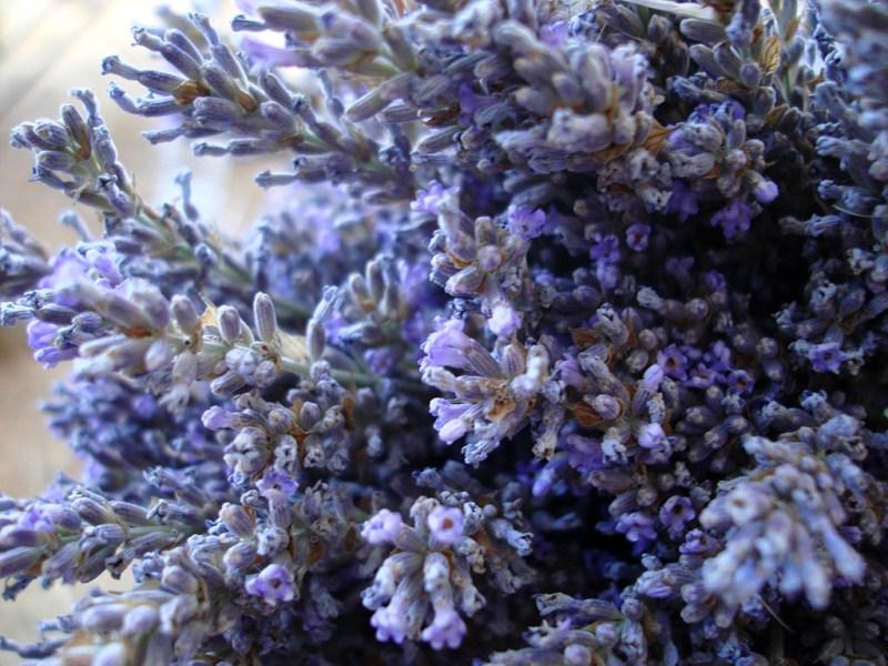 True (population) Lavender