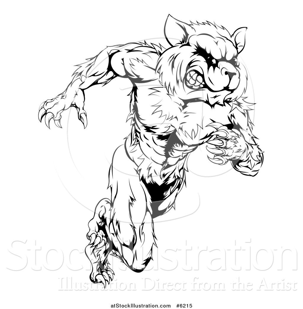 Vector Illustration Of A Black And White Muscular Raccoon