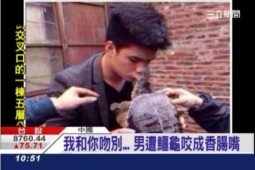 和龜頭的親密接觸… 男子被咬到腫起來 | 國際 | 三立新聞網 SETN.COM