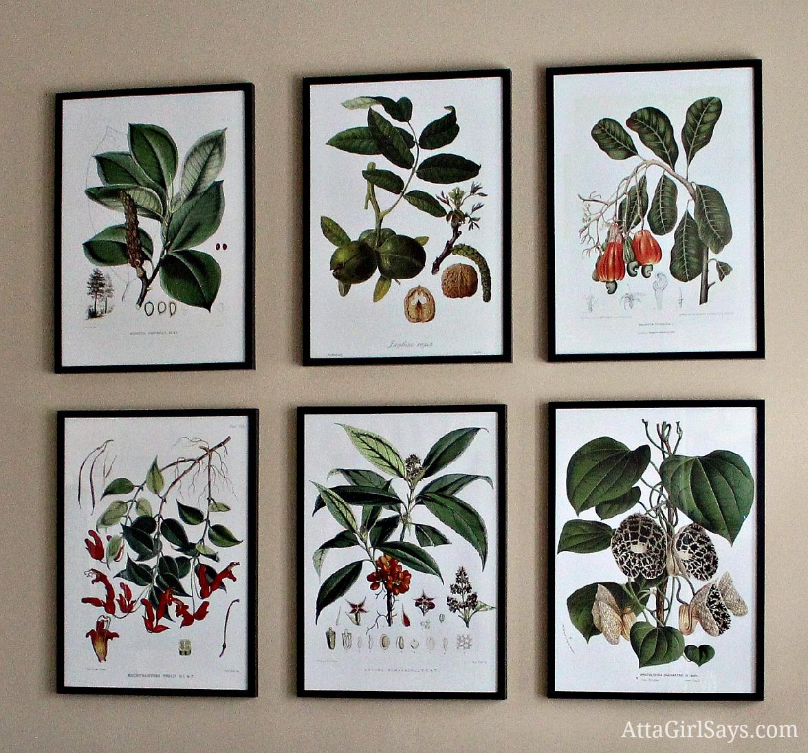 Inexpensive Botanical Art Grouping