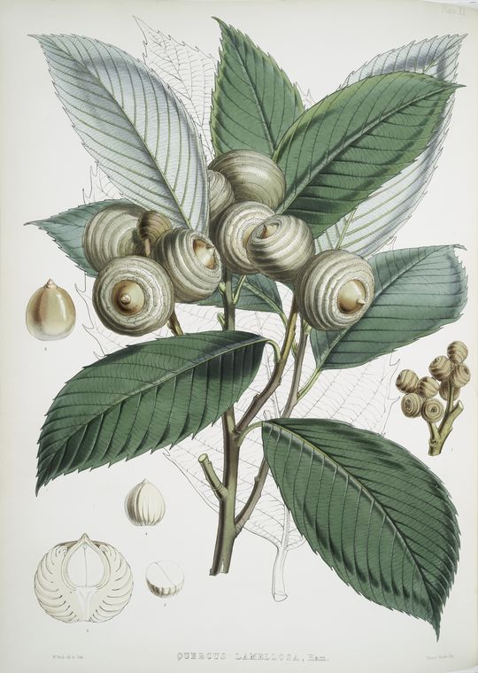 Create Inexpensive artwork with antique botanical prints, in any size you need, without breaking the bank.This also includes a lot of cheap sources for oversized artwork.