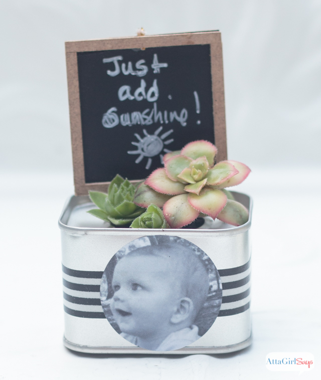 These miniature succulent gardens, personalized with black-and-white photos, make perfect birthday party favors. Or personalize them with childhood photos of the bride and groom for wedding favors or place cards.
