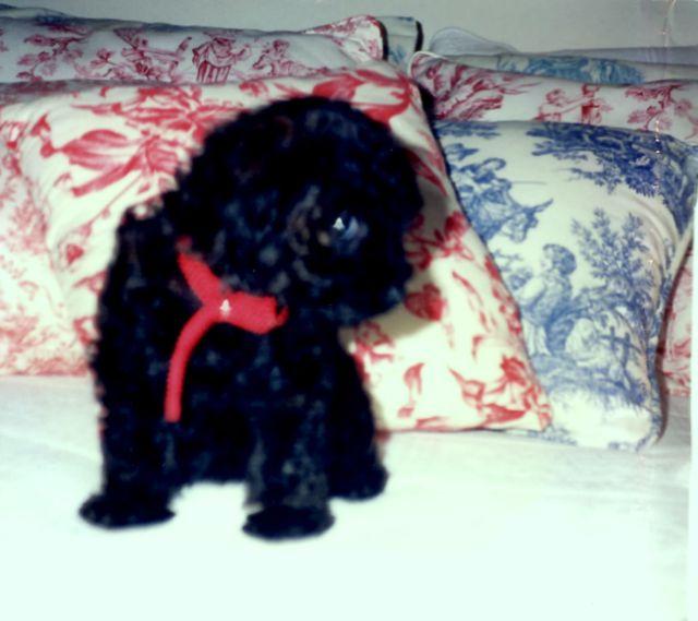 A Dog Named McCoy