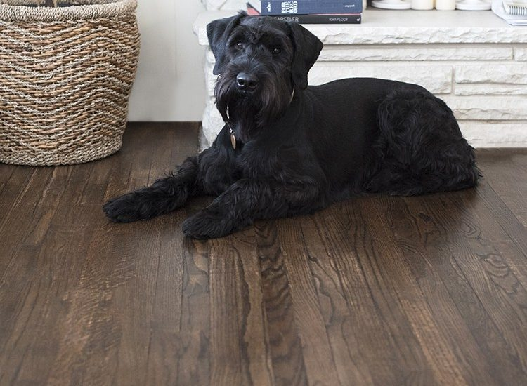 black dog on refinished farmhouse style hardwood floors