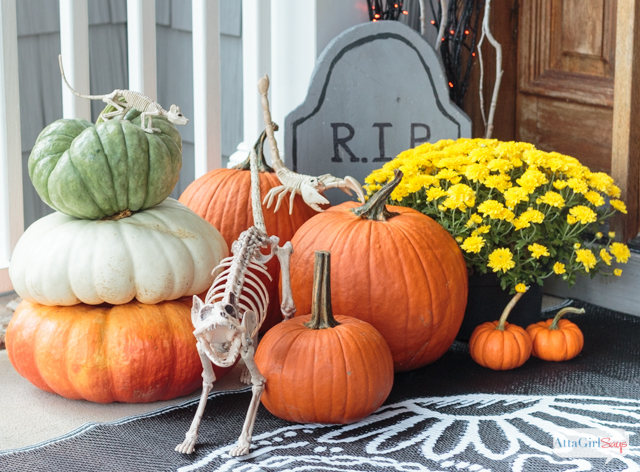 Halloween cat skeleton on a porch with pumpkins and mums