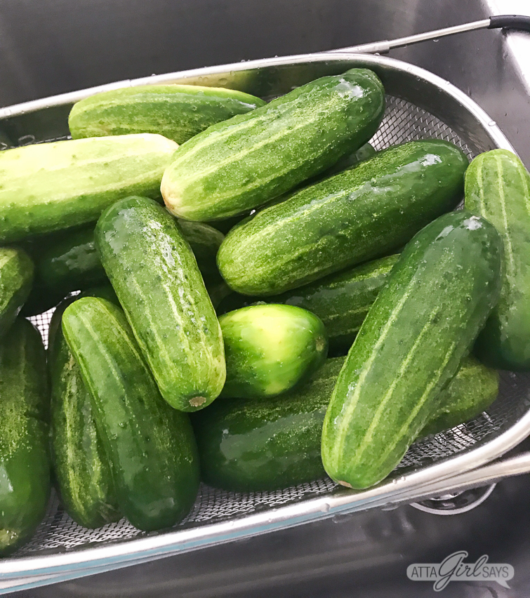 pickling cucumbers in a strainer in a sink