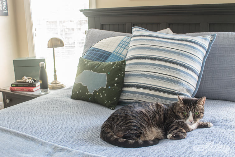 cat laying on a blue bed