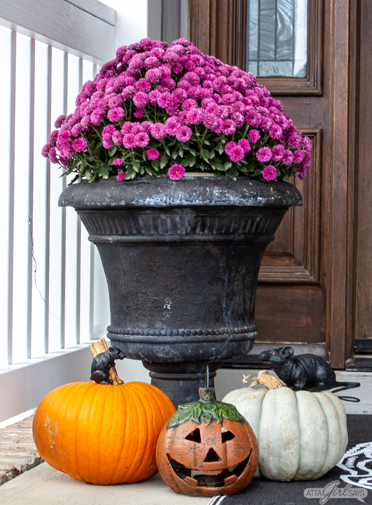 planter with purple mums surrounded by Halloween pumpkins and spooky decor