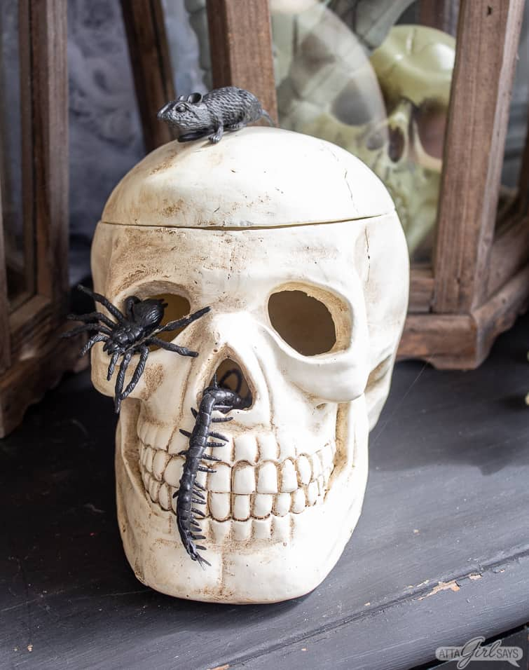 Faux skull with rubber bugs crawling on it for Halloween