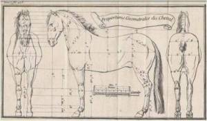 Bourgelat-horse-proportions