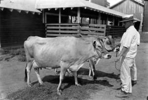 Edmond_Resweber_on_Dairy_Farm