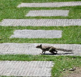 Many Squirrels running around