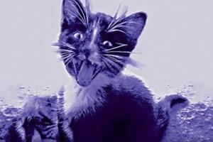 purple kittens