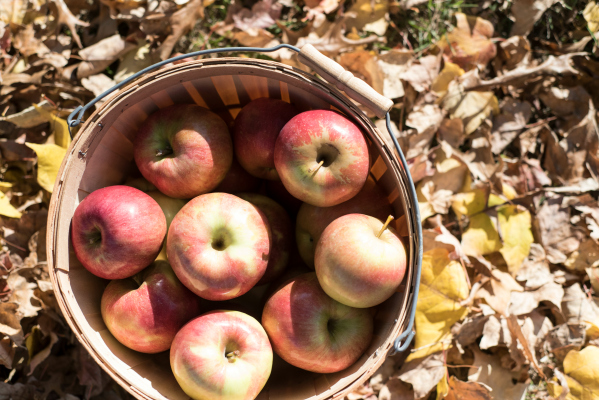 Imagine all the [delicious] possibilities with these apples...