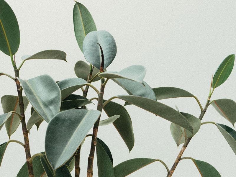 Plants for Ecodecor