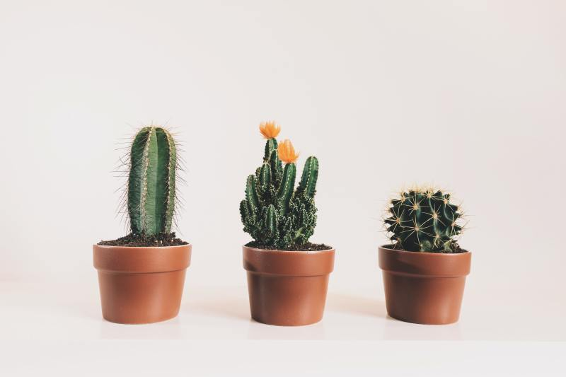houseplants easy to take care of