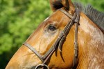 Florida Plagued by Underground Network of Horse Meat Butcherers  - Carlos Gamino