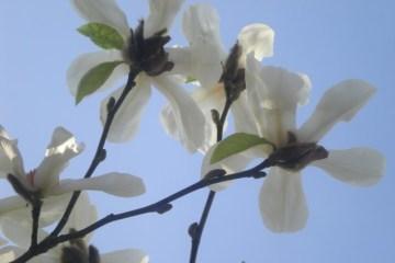 London-090321-006-flower-tree-640x480