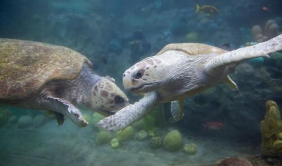 Big Mama and Caton in TurtleTrek