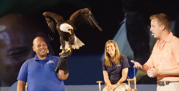 bald eagle at seaworld