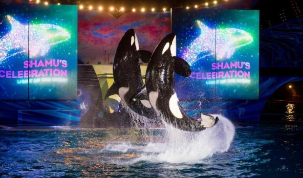 seaworld orlando summer nights shamu
