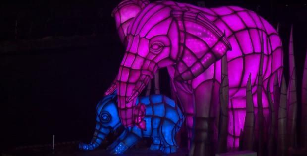 Rivers of light elephants