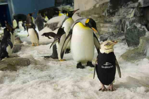 seaworld orlando penguin wetsuit
