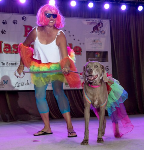 Fantasy Fest Pet Masquerade Key West costume contest dog