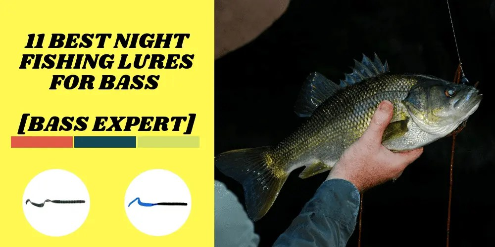 Best Night Fishing Lures for Bass