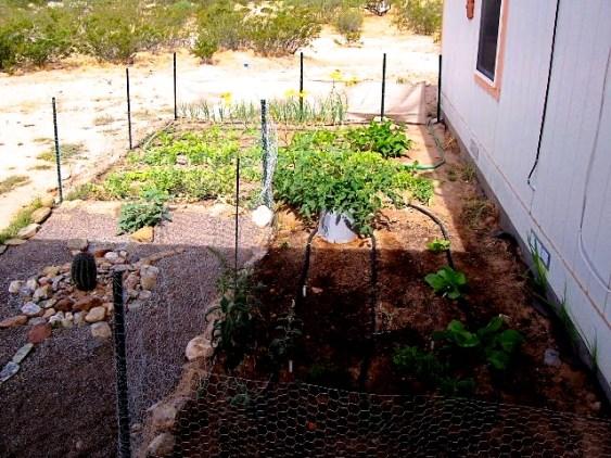 Desert gardening 1