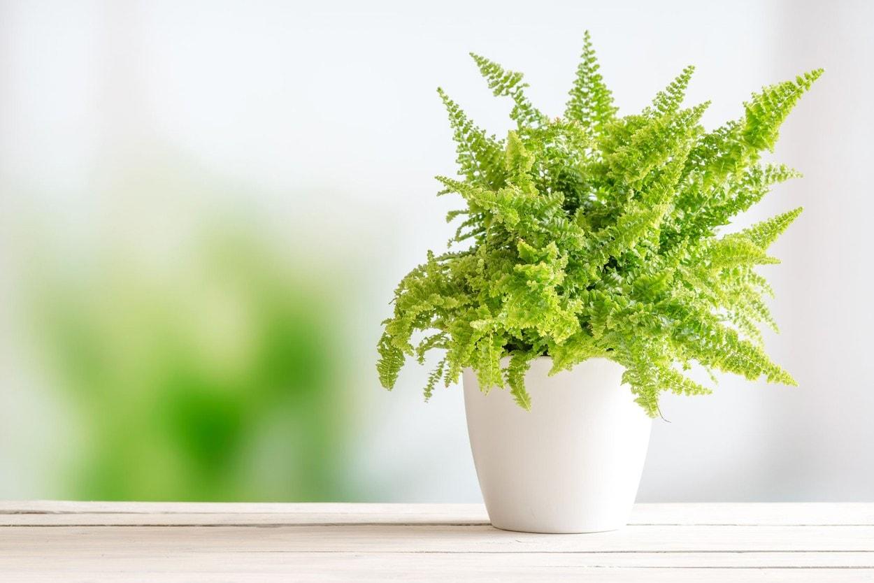 Picioare ideas in | sănătate, remedii naturiste, remedii naturale
