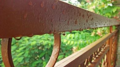 after rain water drops