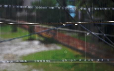 Rain Drop - Bokeh
