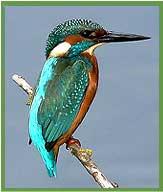 kusheswar sthan bird sanctuary